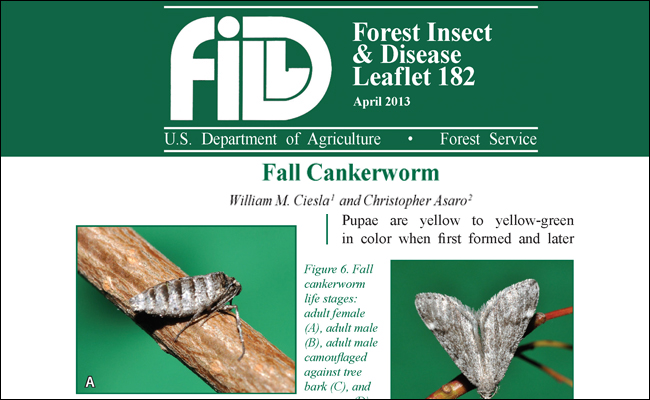 Publication highlight of Fall Cankerworm FIDL