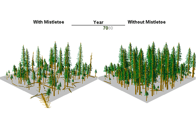Mistletoe Model Example Image